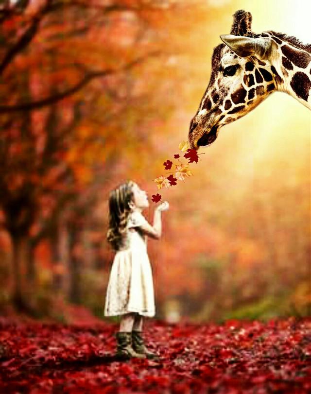 #freetoedit #autumncolors #autumnleaves #autumnvibes