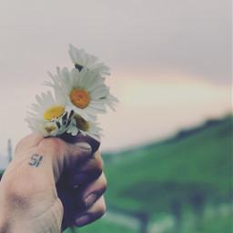 pcflowerpower flowerpower freetoedit flower daisyflower