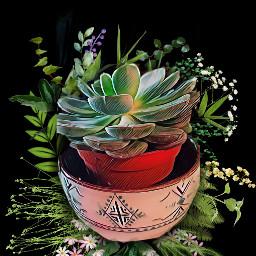 freetoedit cactus vegetation powerofnature