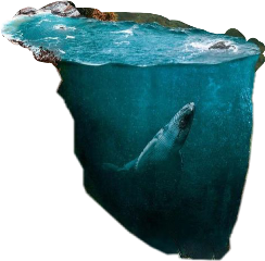 pool surreal fish freetoedit