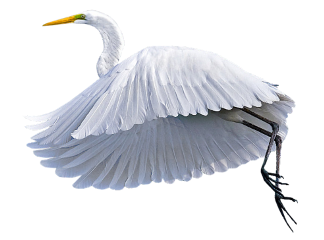 heron bird swan crane freetoedit