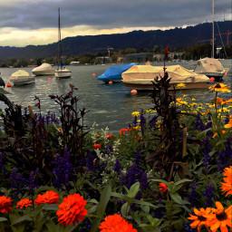 autumnsunset september2018 lakeside boats flowers freetoedit