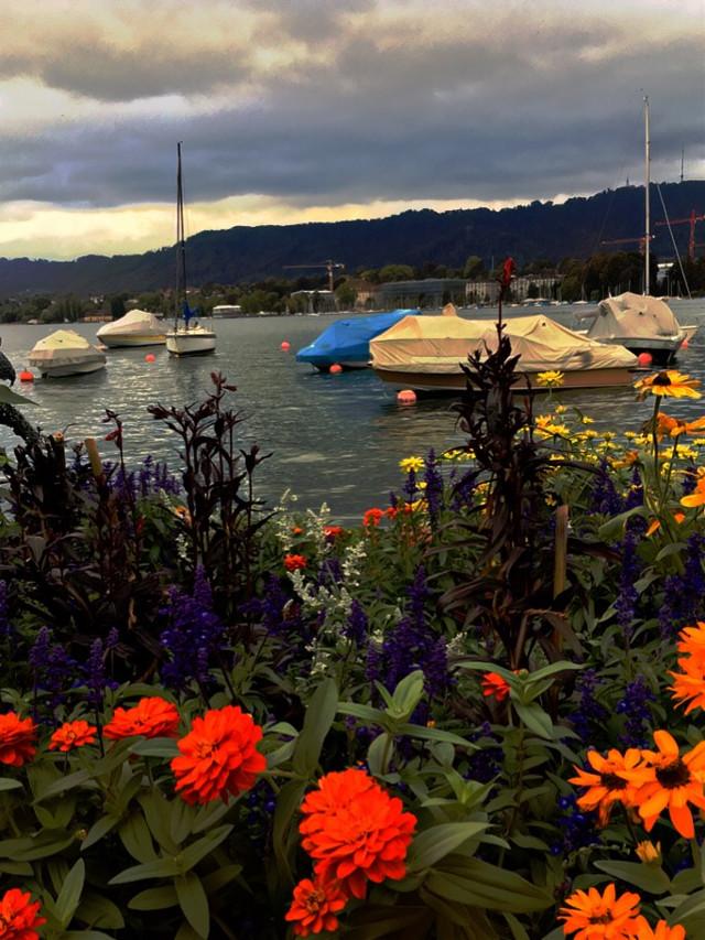 #autumnsunset #september2018 #lakeside #boats #flowers #autumn #freetoedit #remixit #zurich #zurichsee #zurichlake