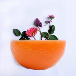 freetoedit orange vase orangevase
