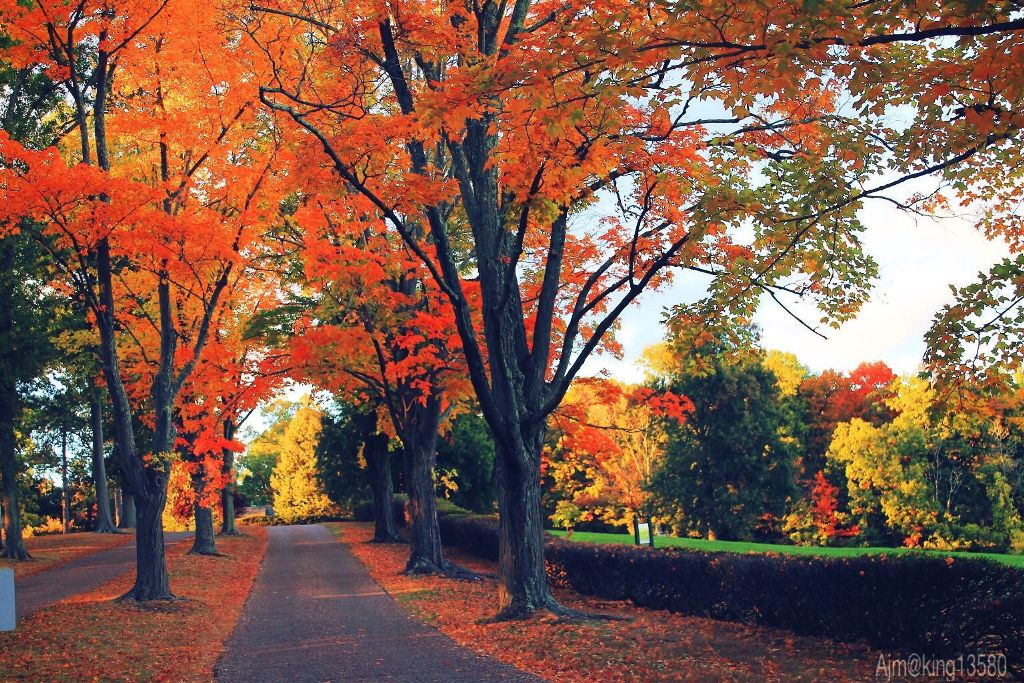 Glorious Fall In This Season Of >> Welcome Fall And Its Glorious Colors It S The Season