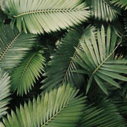 plant plants green background nature freetoedit