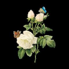 freetoedit bmrs flowers flower