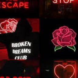 freetoedit neonlights neonsigns brokendreamsclub remixit