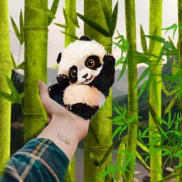 irclandscapephotography landscapephotography panda nature love freetoedit