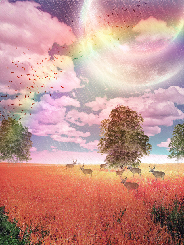 🌈🌈 original image of @maciejgrzegorz125 #freetoedit #fantasy #surreal #rainyday #rainbow