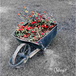 photography nature flowers wheelbarrow park