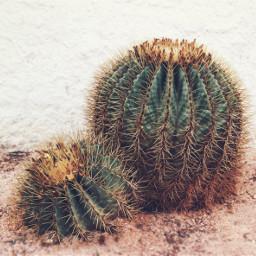 freetoedit beachhouse cactus softgrungetexturedwallbackground urbannaturephotography