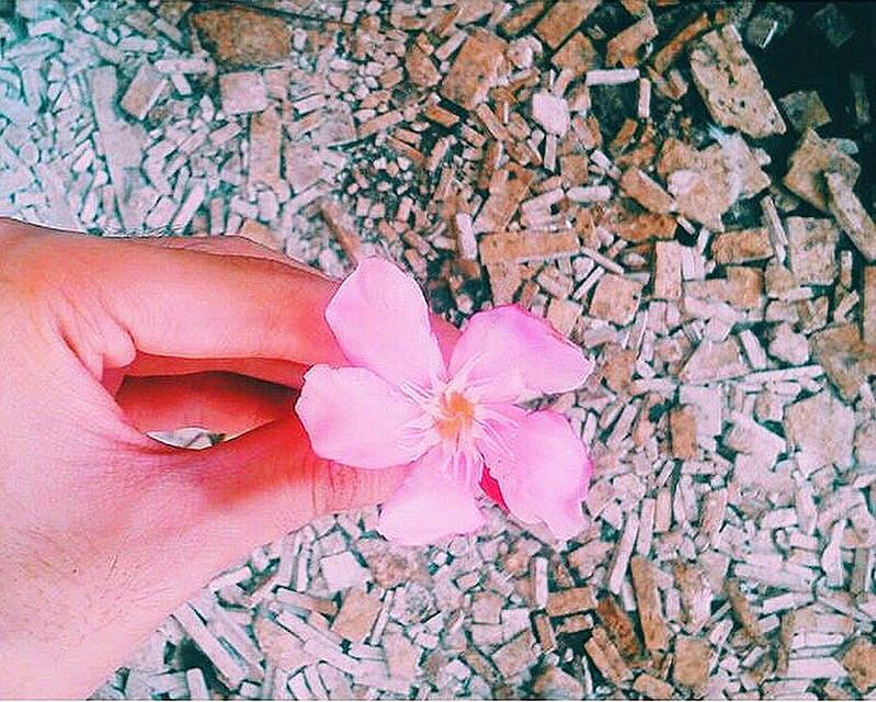 #photography #flower #challengeoftheday