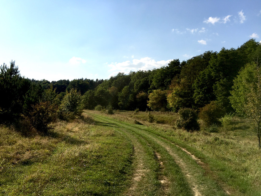 #photography #nature #forest #road #autumn #ukraine #travel #freetoedit
