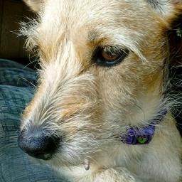 mydog nova