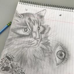 sketching shading cat