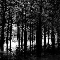 freetoedit blackandwhite forest