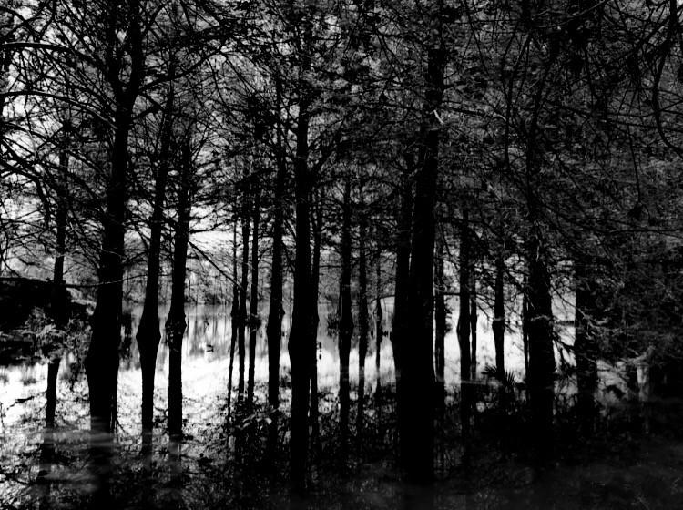 #freetoedit #blackandwhite #forest