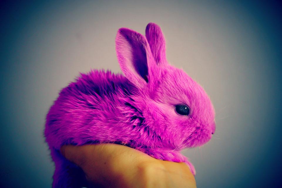 #freetoedit #bunny #pink #fluffy #cute