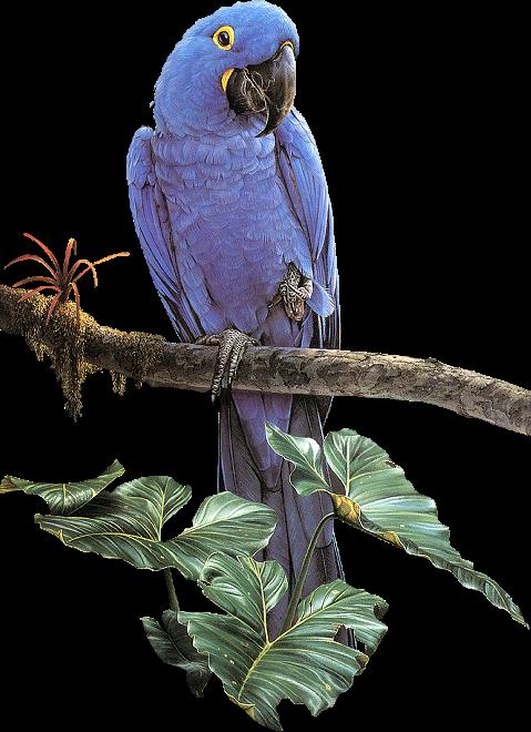 #ftestickers#parrot