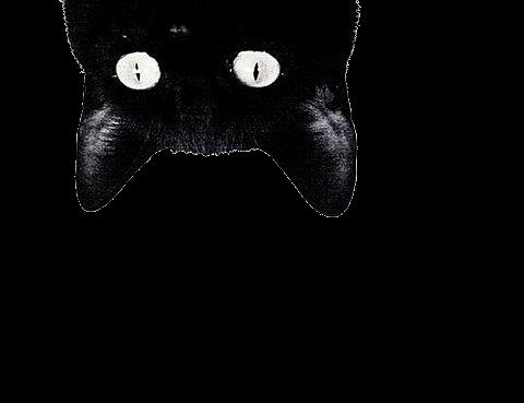 #halloween #ghost #tumblr #spooky #spoopy #grunge #scary #freetoedit #black #sticker #creepy #cat #neko #freetoedit