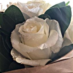 freetoedit whiterose