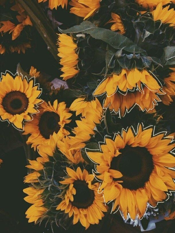 #freetoedit #flower #yellow #yellowflower #sunflower #sun