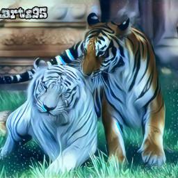 freetoedit tigers animalsarelife carefree