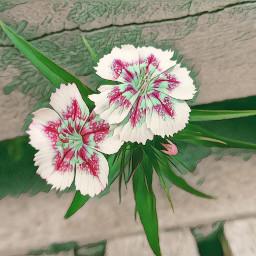 freetoedit flowers greenmagiceffect myphoto