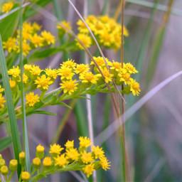 freetoedit florals floralcanvas floralbackgrounds nature