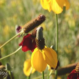 nature wildflowers bokeh