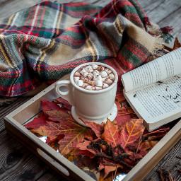 freetoedit fall hotchocolate marshmellow drink