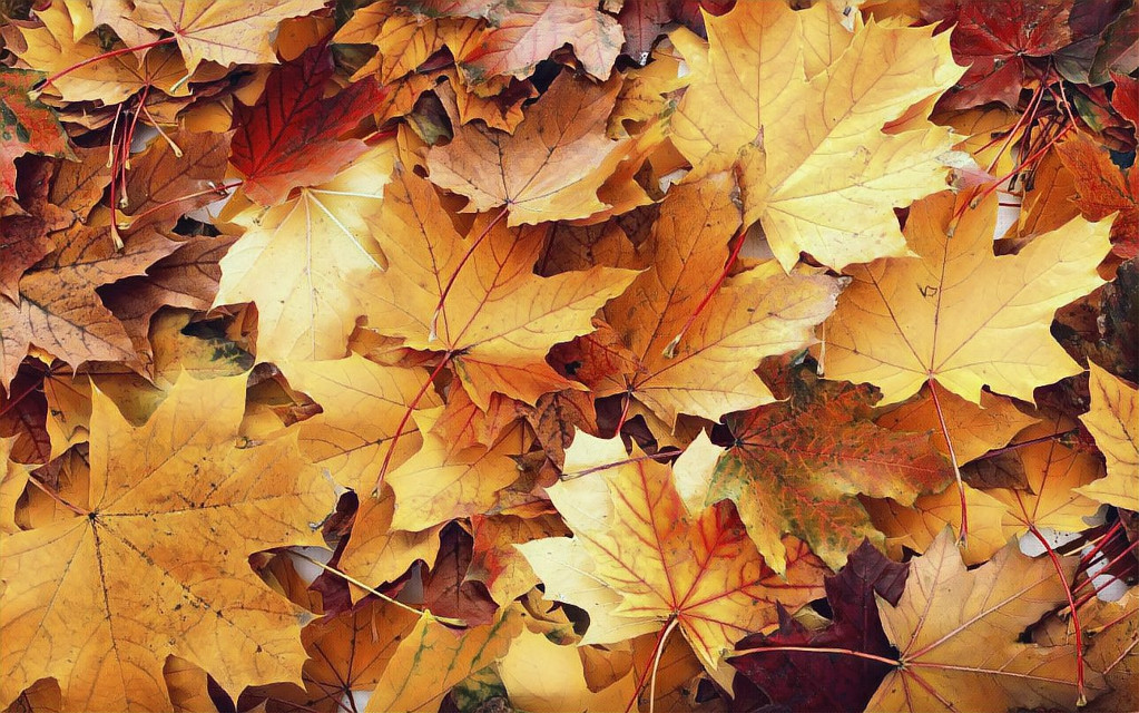 """There is something incredibly nostalgic and significant about the annual cascade of autumn leaves."""