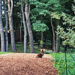 freetoedit dog nature path trees
