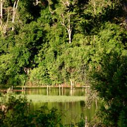 nature greenspace landscape