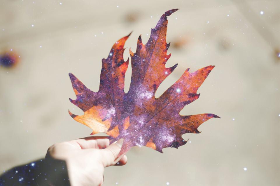 #fall #autumn #leaf #galaxy #stars #overlay #minimal #seasons #madewithpicsart #picsart #art  #freetoedit