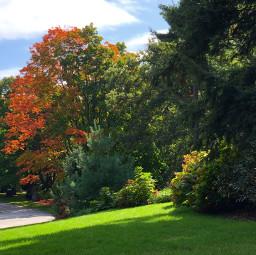freetoedit trees fallcolors path nature