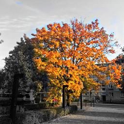 freetoedit autumnleaves autumn autumnsunset golden