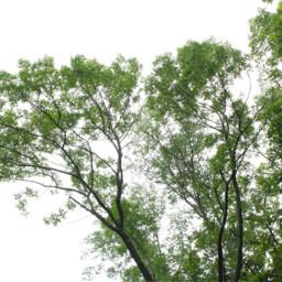 unsplash forest green darkforest interesting freetoedit