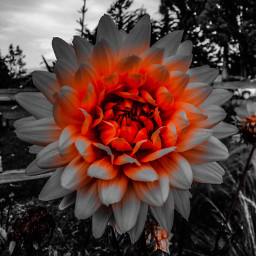 photography colorpop flowerpower