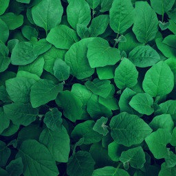 leaves background backgrounds green grass freetoedit