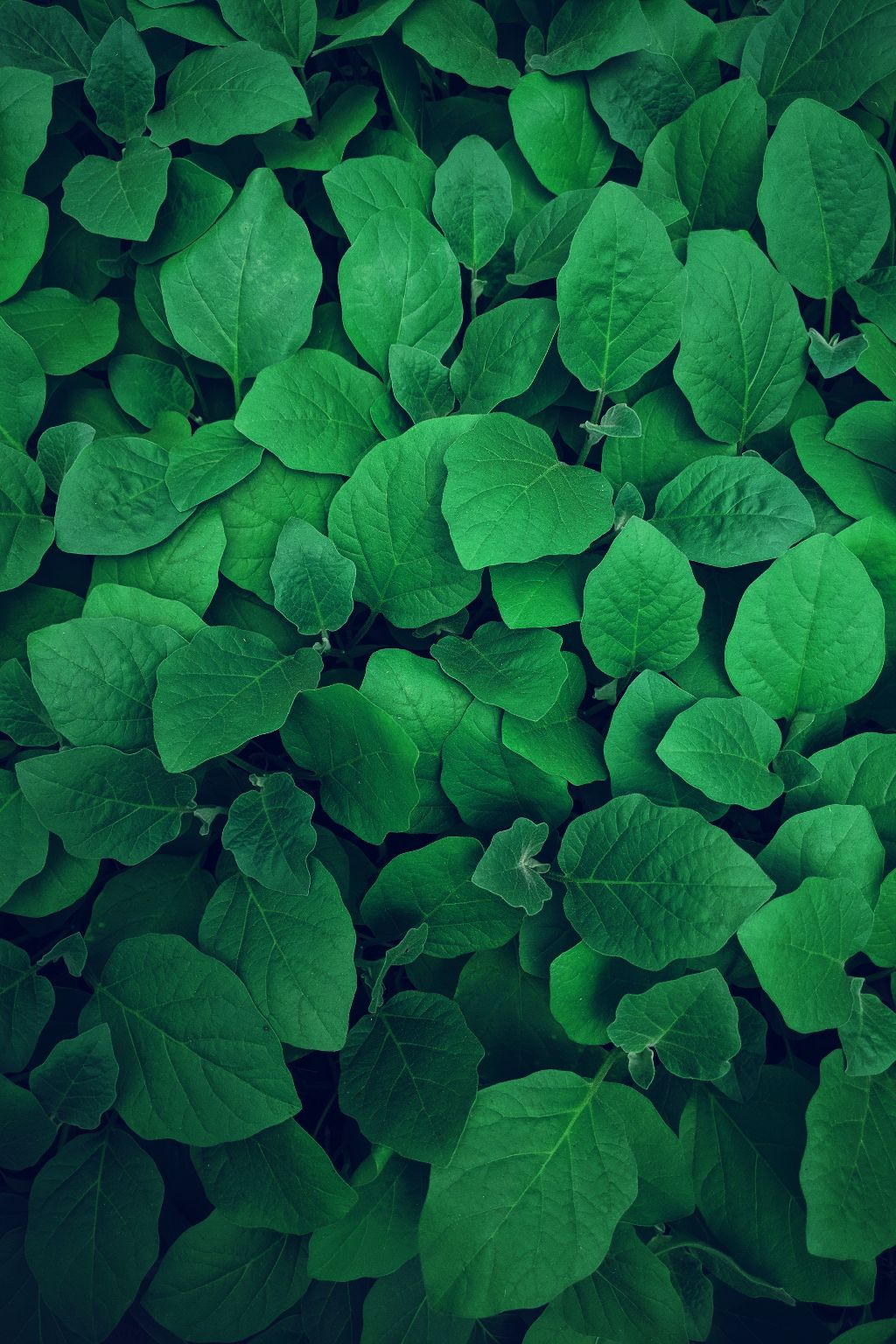 You only fail when you stop trying! Try remixing! Unsplash (Public Domain) #leaves #background #backgrounds #green #grass #freetoedit