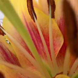 freetoedit mypic flowers house closeupshot