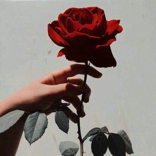 #freetoedit #rose #beauty #redaesthetic