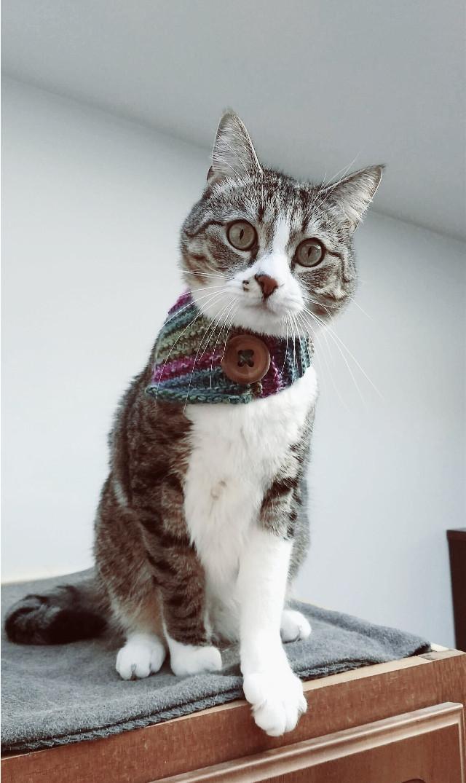 #pcscarf #scarf #cat #cute #Curious