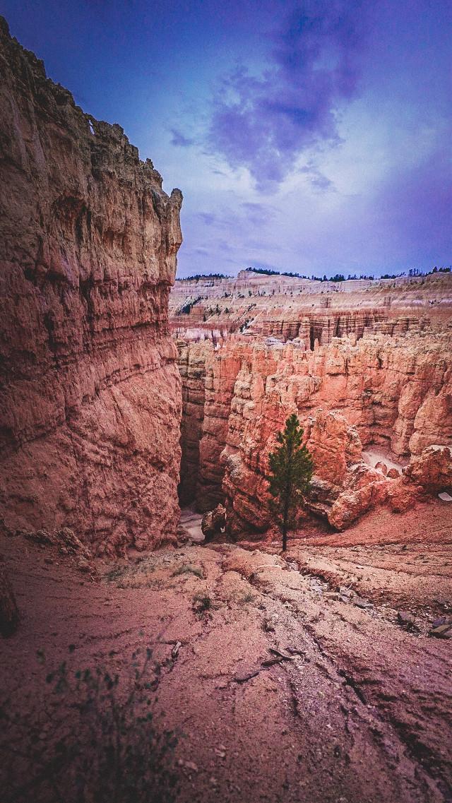 Trying not to fall ... • • • • • #travelstoke #mountains #travelgram #hike #nature #landscape_captures #naturelovers #utah #nationalpark #globetrotter #nature_perfection #sunset #naturelover #sonyalpha #bealpha #landscapelovers #livetravelchannel #alphacollective #landscape #sunsetlovers #travel #sunset_madness #traveladdict #wander #explore #wanderlust #exploreeverything #adventure #wanderfolk #brycecanyon #freetoedit