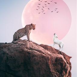 freetoedit leopard wolf fullmoon moon