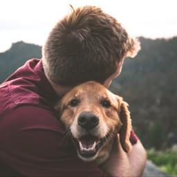 dog dogs animal animals people freetoedit