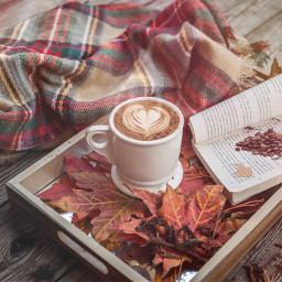 ircautumnfeels autumnfeels freetoedit