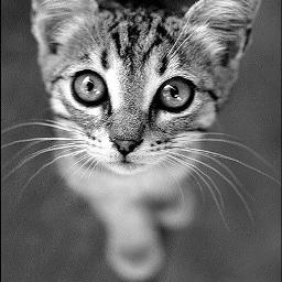 look eyes cat photography blackandwhite